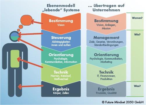 Das Ebenenmodell lebender Systeme