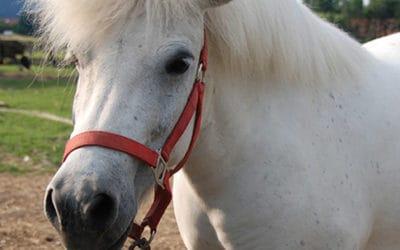 Wird Ihr Betrieb zum Ponyhof?